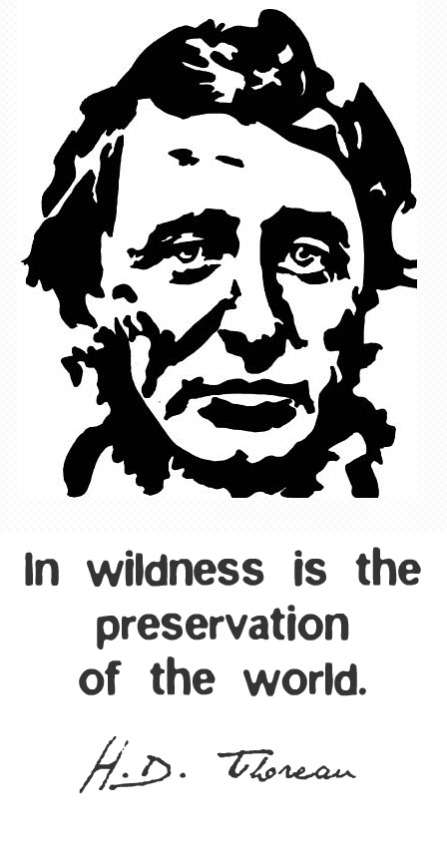 Henry David Thoreau