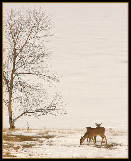 deer-scene-by-mike-hodgson-447x551