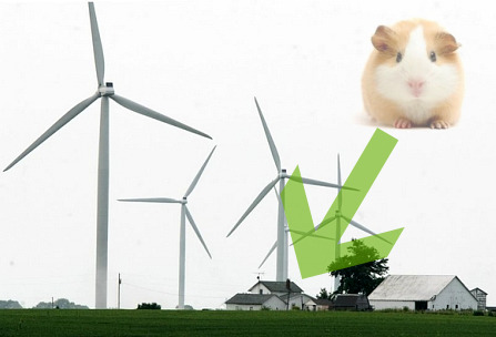 Guinea-pig-and-wind-farm-2-447x304