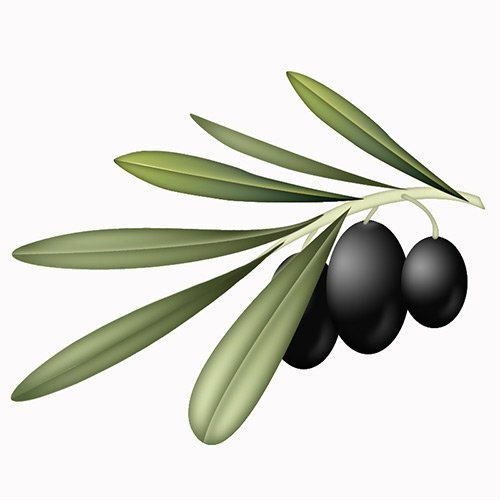 Olives__olive_branch_by_weberica